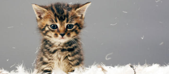 Pourquoi Les Animaux Nous Touchent Animalcalin Association De Mediation Animale Du Tarn Midi Pyrenees Occitanie
