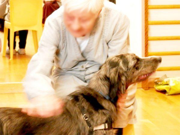 joyce chien m diateur animalc lin association de m diation animale du tarn midi pyr n es. Black Bedroom Furniture Sets. Home Design Ideas