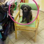 Zootherapie