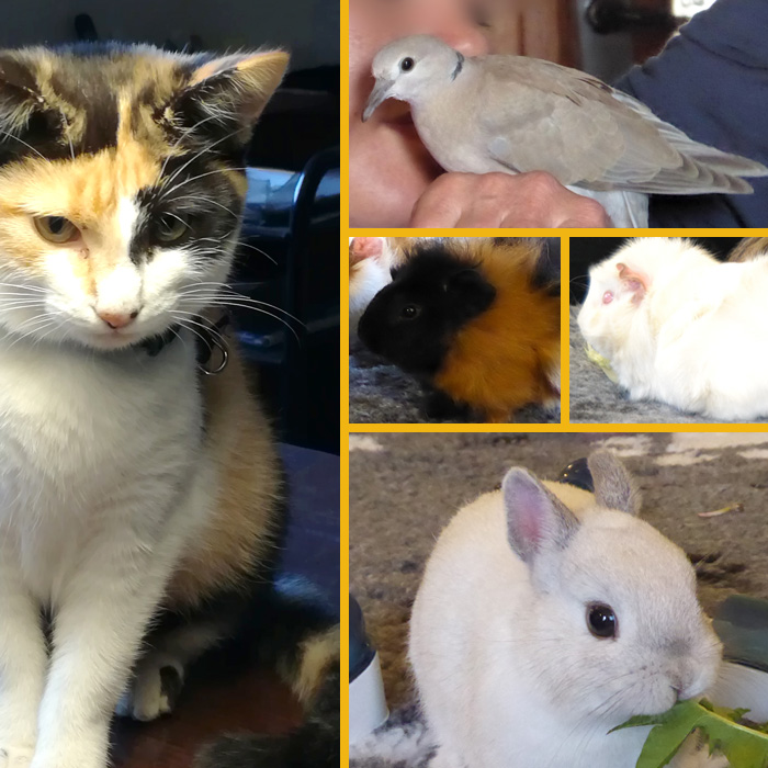 Formation médiation animale