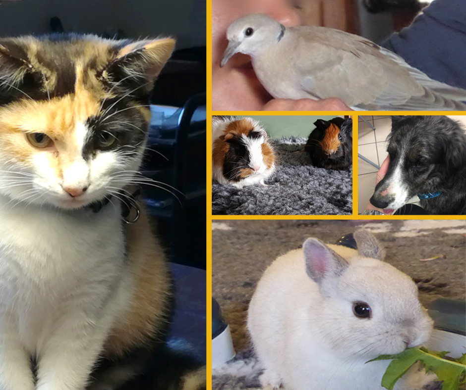 Animaux formation médiation animale ACA